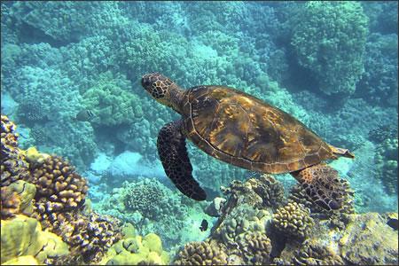 Hawaii bans sunscreen and urges reef-safe alternatives